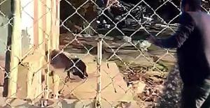 VAHŞET canlı civcivleri, metruk binada bulunan sokak köpeklerine yedirdikleri