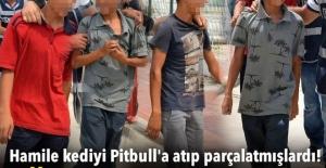 'Çıtır'ı, Pitbull'a parçalatan 4 çocuk adliyeye sevk edildi
