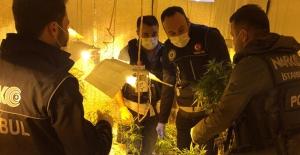 Polisler bile şaştı kaldı! Zehir bahçesi