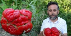 Kastamonu'da bahçeyi gezerken fark etti! 1 kilo 372 gram ağırlığında