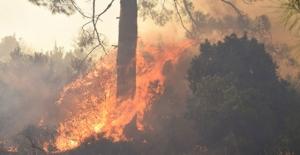 bOrman yangınlarında ağaçların.../b