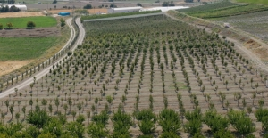 5 yıl önce teşvik için oluşturulmuştu, şimdi tüm ilçeye yetecek kadar meyve üretiliyor