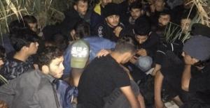 Antalya'da sazlıklar arasında saklanan 28 kaçak göçmen yakalandı
