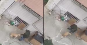 Maltepe'de doktorun köpeğine yumruklu şiddeti kamerada