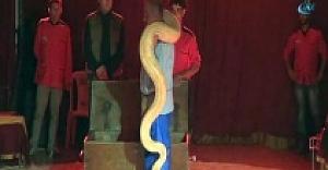 5 metre uzunluğundaki 70 kiloluk pitonla nefes kesen gösteri