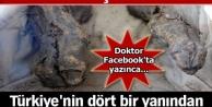 9 asırdır çürümedi! Türkiyenin dört bir yanından ziyaretçi akınına uğruyordu!