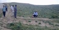 Adana'da Karpuz Ve Ayçiçeğini Dolu Vurdu