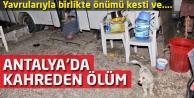Antalyada kahreden ölüm! Yavrularıyla birlikte önümü kesti ve...