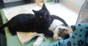 Bu kedinin yaptıkları veterinerleri şoke etti!