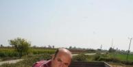 Çukurova'da İlk Ürün Mısır Hasadı Başladı