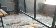 El Konulan Köpeğini Barınakta Ziyaret Etti