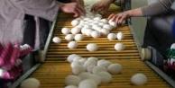Yumurtanın ömrü: 28 gün! STANDART DEĞİŞTİ
