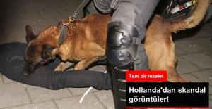 Hollanda Polisi Türklere Köpeklerle Saldırdı