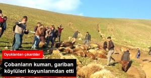 """Çobanların """"Bir şey Olmaz"""" Deyip Dereden Geçirdikleri Koyunlar Sele Kapıldı"""