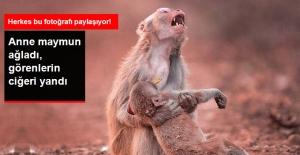 Yavrusu İçin Ağlayan Anne Maymunun Yürek Burkan Görüntüsü