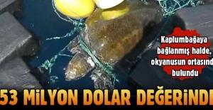 Deniz kaplumbağasıyla kokain ticareti