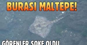Maltepe'de vatoz, kalkan ve kalamar kıyıya vurdu