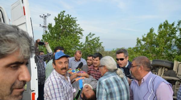 Tır Devrildi, Soya Fasulyeleri Zeytinliğe Saçıldı