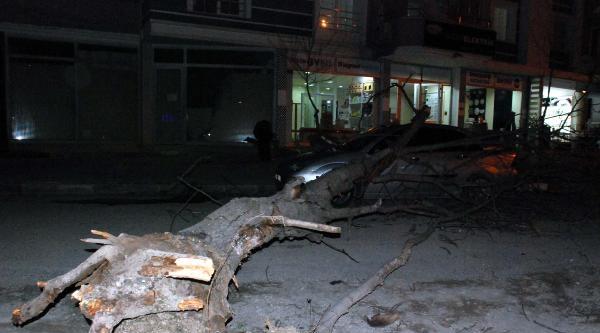 Tokat'ta Lodos Ağacı Kökünden Söktü