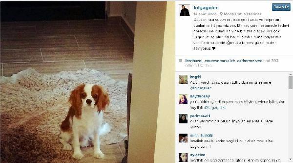 Tolga Güleç, Hasta Köpeği İçin Dua İstedi