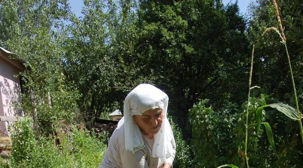 'toprak Ana' Bahçeden Besleniyor