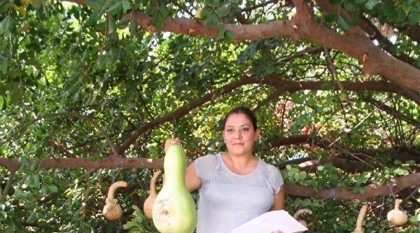 Tübitak Destekli Su Kabağının Genetik Araştırması