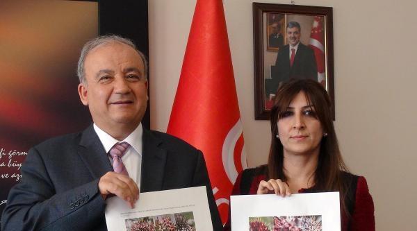 Tunceli'de İki Kenger Bitki Türü Tespit Edildi