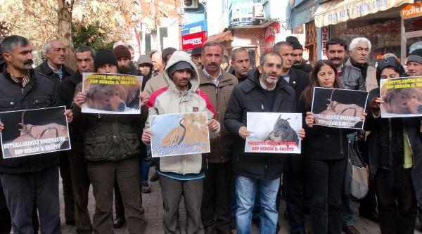 Tunceli'de Kutsal Sayilan Dağ Keçilerinin Avlanmasi Protesto Edildi