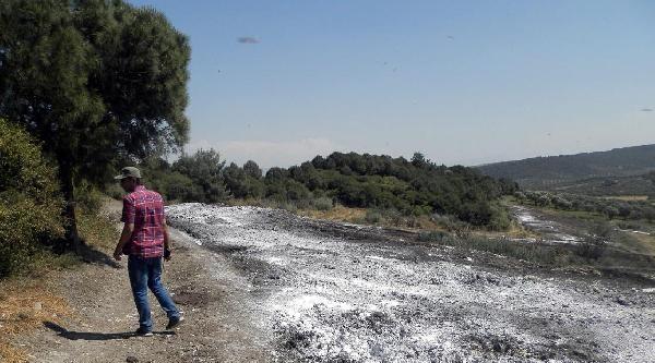 Turizm Cenneti Foça'ya Gübre Darbesi
