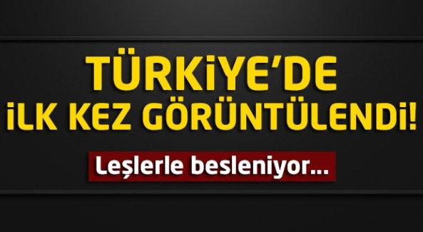 Türkiye'de ilk kez görüldü!