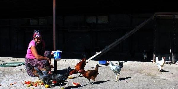 Türkiye'de Beyaz Et Tüketimi Son 10 Yilda 2 Kat Artti