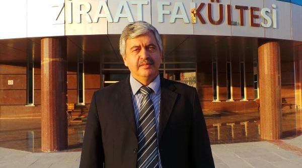 Türkiye'de Yilda 30 Bin Ton 'trabzon Hurmasi' Üretiliyor