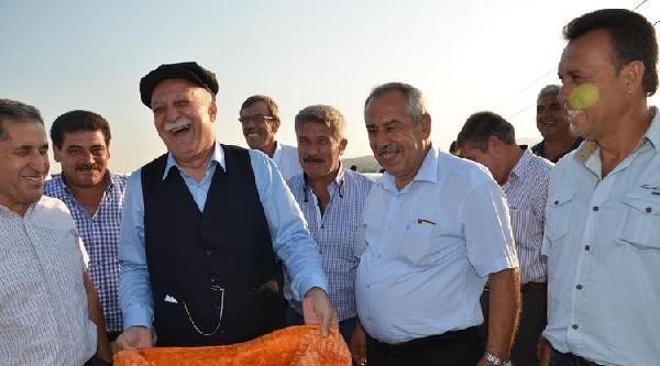 Tzob Başkanı Bayraktar, Biçerdöverle Mısır Hasadı Yaptı