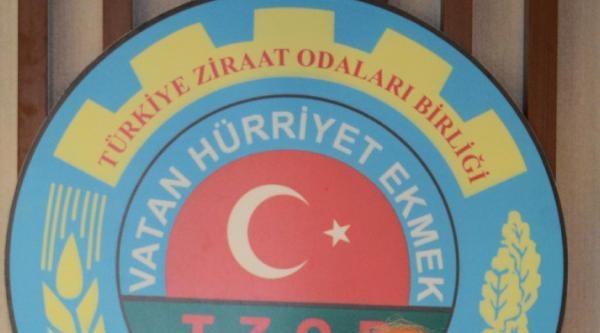Tzob Başkanı Bayraktar: Don Zararı Fiyatlara Yansımadı