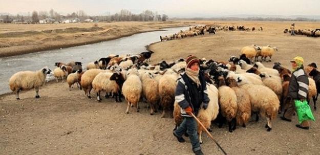 Üç bin lira maaşa çoban yok!