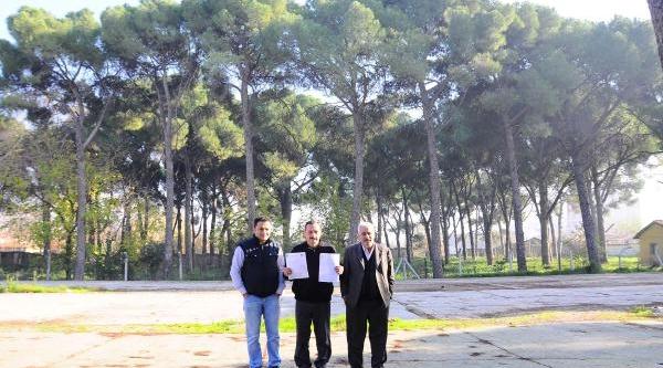 Valilik Ve Belediyenin Ağaç Kavgasi