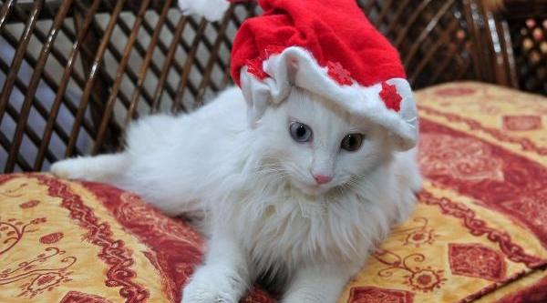 Van Kedilerine Noel Baba Şapkasi