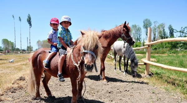 Vanlı Kadın Girişimcinin At Çiftliğine Yoğun İlgi