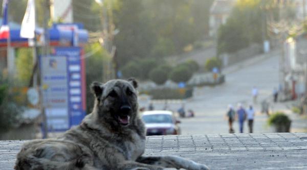 Varto'da Ak Parti Binasına Molotof Kokteyli Attılar (ek Fotoğraflar)
