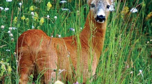 Yaban Hayvanlari Için Besin Ormanlari Kuruluyor
