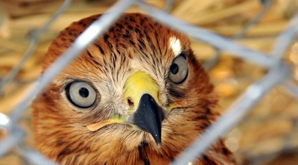 Yaban Kuşları Özgürlüğe Uçacak