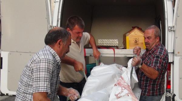 Yalova'da Esrarengiz Ölüm (ek Fotoğraflar)