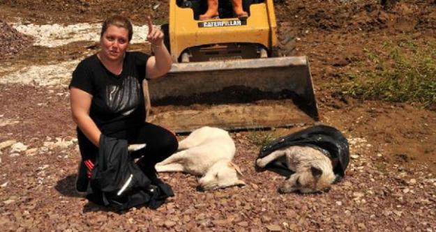 Yalova'da Hayvan Katliamları