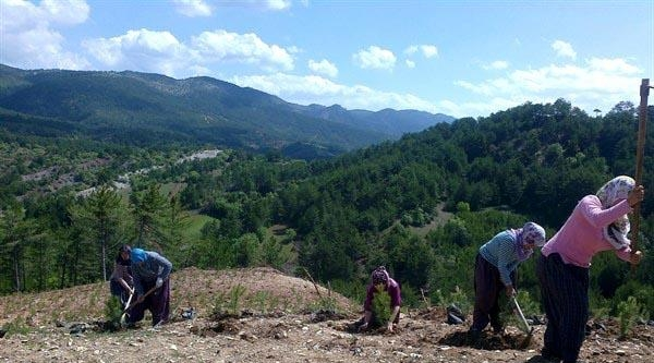 Yanan 30 Hektarlık Alana 80 Bin Fidan Dikildi