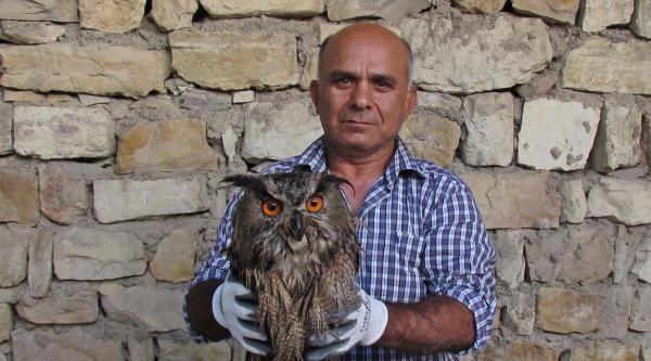 Yaralı Bulunan Puhu Kuşu Tedaviye Alındı