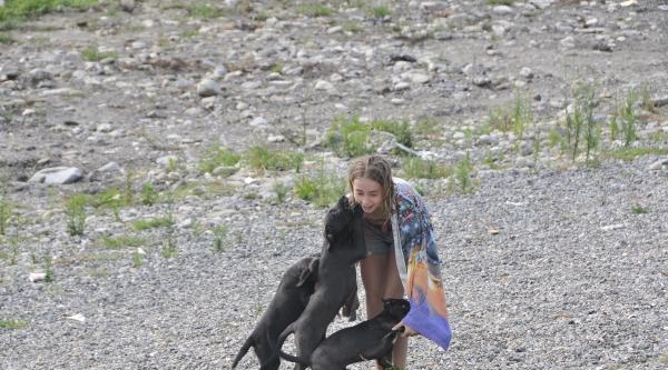 Yavru Köpekler Canından Bezdirdi