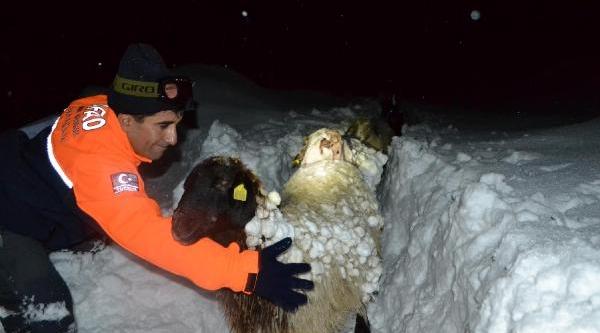 Yaylada Mahsur 3 Çoban Ve 600 Küçükbaş Hayvan Kurtarildi - Ek Fotoğraflar