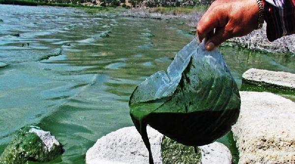 Yeşile Dönen Bafa Gölü Köpürdü