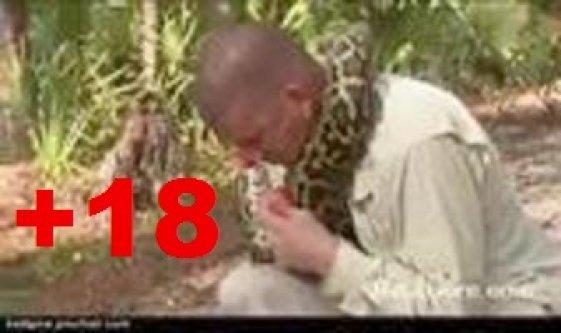 Yılan uzmanı pitona av oldu! -İZLE (+18)