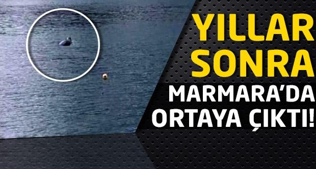 Yıllar sonra Marmara'da ortaya çıktı!